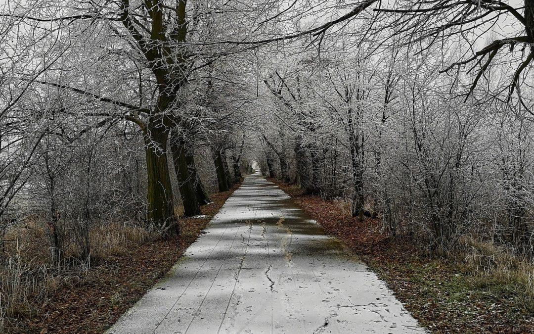 Trasy Milada Winter Run 2020